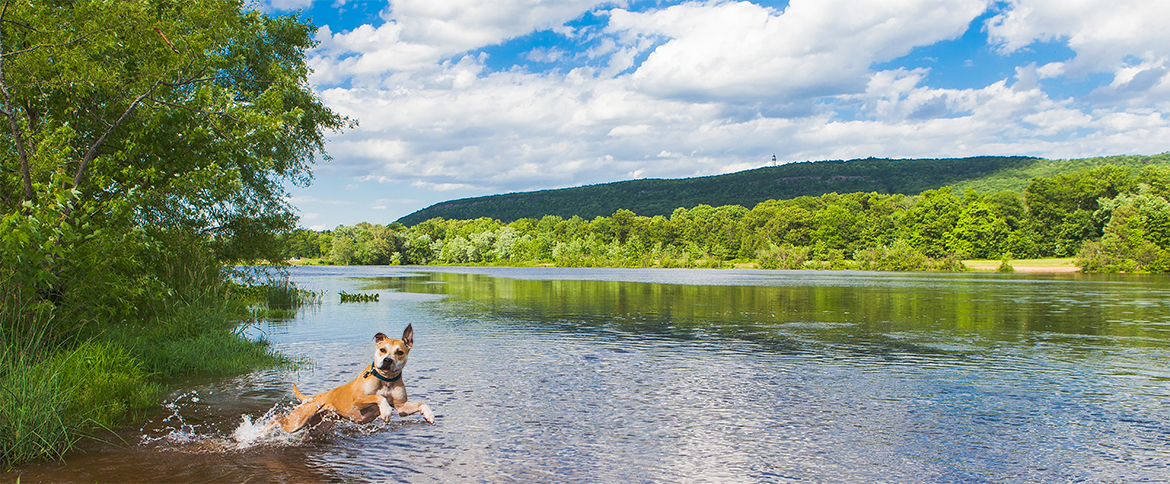 Pet friendly hikes in ct visit ct for Most beautiful places in ct